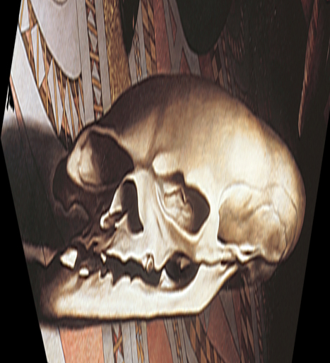 Amb skull