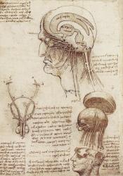 Leonardo brain