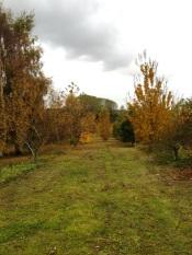 BA autumn2