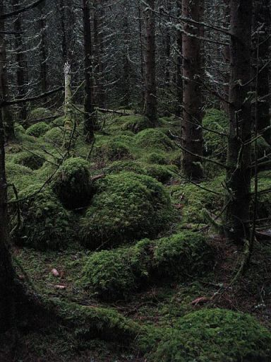 A_dark_forest_-_geograph.org.uk_-_901640